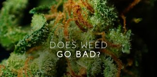 does weed go bad