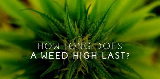 how long does marijuana high last