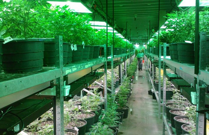 Washington Cannabis Industry to Diversify with New Bill