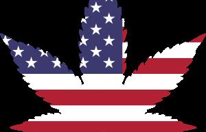 The Growing Job Market in the Marijuana Industry