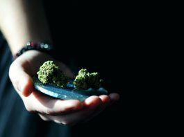 Can you donate blood if you smoke weed?