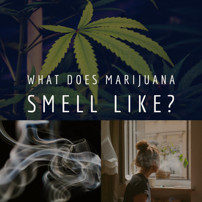 What Does Marijuana Smell Like?
