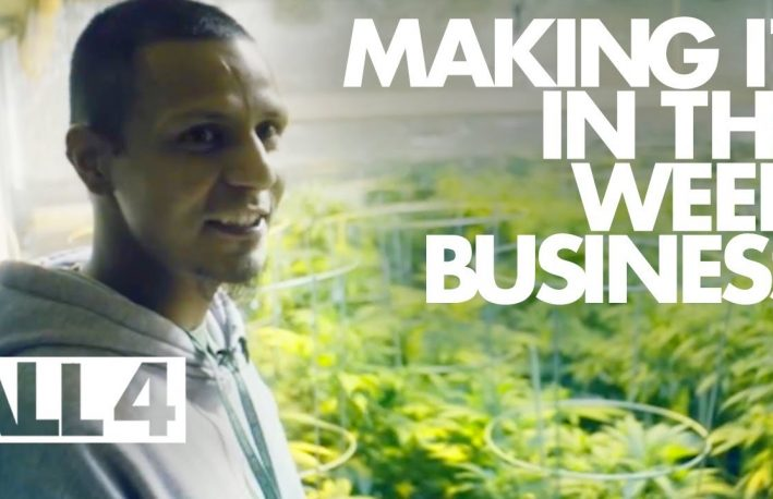 Business of Marijuana videos