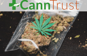 CannTrust Crack-Down, Can We Trust?