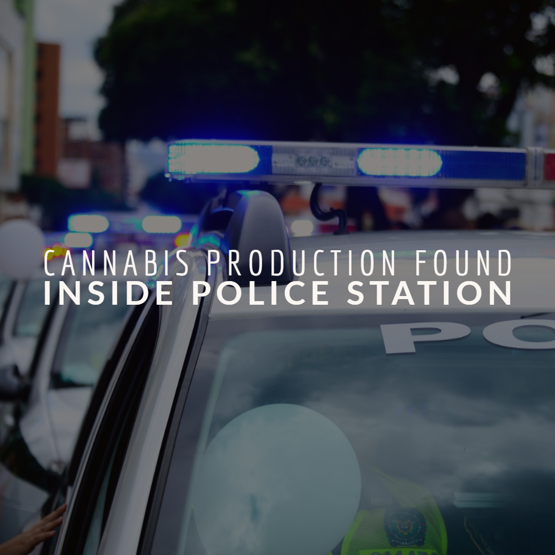 Cannabis Production Found Inside Police Station